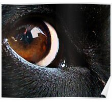 An Eye For My Master Poster