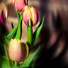 tulips by Shannon Holm