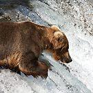 Fishing Mother Bear by Gina Ruttle  (Whalegeek)