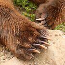 Cubby Bear Claws by Gina Ruttle  (Whalegeek)