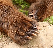 Cubby Bear Claws by Gina Ruttle  (Whalegeek)
