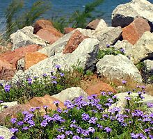 Wildflower Shores by courier