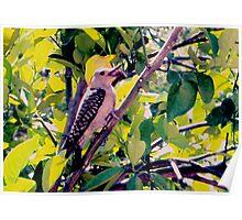 Woodpecker in my orange tree Poster