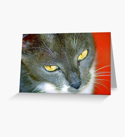What do you want? Greeting Card