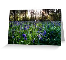 Badbury Hill Bluebells Greeting Card