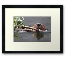 Beaver and Reflection Framed Print