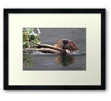 Beaver and Reflection Framed Print