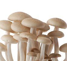 Brown mushrooms by Debora Horwitz