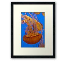 Jellies Framed Print