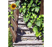 Sunflower and Grapes in the Sun Photographic Print