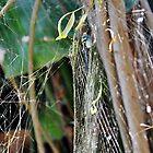 Orb-web wonder by Karen01