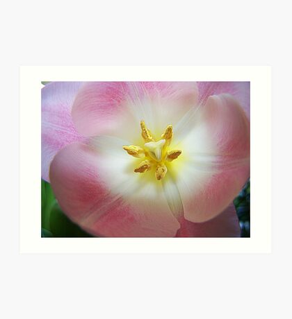 Macro Of Pink Tulip Art Print