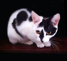 HERES LOOKIN AT U....CAT...FELINE...PILLOW AND OR TOTE BAG- PICTURE ECT.. by ✿✿ Bonita ✿✿ ђєℓℓσ