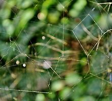 Triple storey web by Karen01