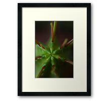Cactus Spike Framed Print