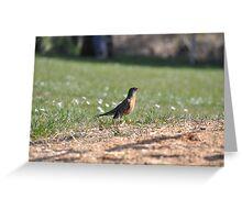 A surprising social robin Greeting Card