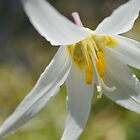 White Fawn Lilly 2 by TheKoopaBros