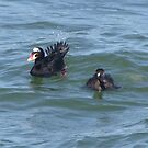 Odd Duck by Lolabud