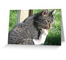 Paw Licking Good Greeting Card