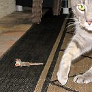 Festus and the Lizard by MichelleR