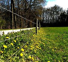At the spring fence by jchanders