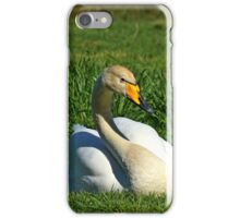 Whooper Swan sitting on grass iPhone Case/Skin