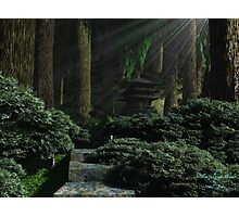 Stroll in Ancient Woods Photographic Print