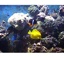 One Fish, Two Fish Photographic Print