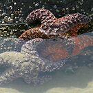 Underwater Stars by Rhonda  Thomassen