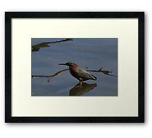 Spring Bird Framed Print