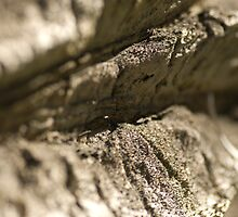 Palm Skin Macro by Limitlessonline