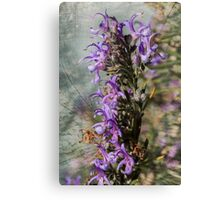 Rosemary Flowers Canvas Print