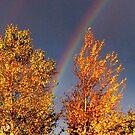 Autumn by John Brotheridge