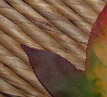 Colour of Autumn by Sam McCabe