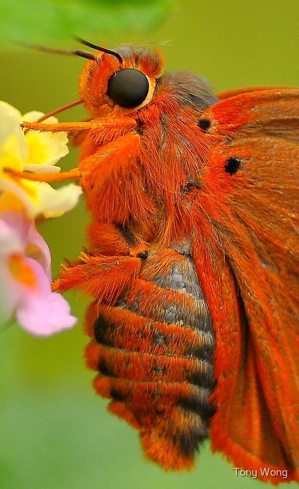 Branded Orange Awl  21 by Tony Wong