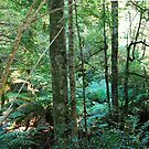 Rainforest Gallery by Judi Corrigan
