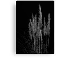 Vertical pampas grass on black background. Canvas Print