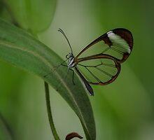 Butterfly by JamesEPhotos