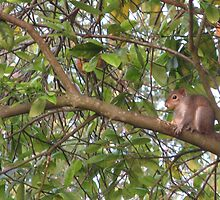 Squirrel in a Tree by ValeriesGallery