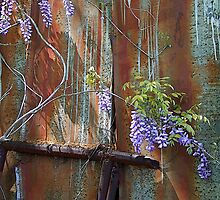 wisteria on metal by g richard anderson