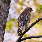 Perched by MMerritt