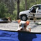 brutus goes camping by Christopher  Ewing