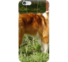 Old Time Farm Shepherd Dog iPhone Case/Skin