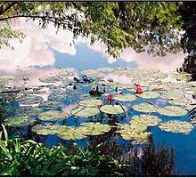 Weather Reflecting © shhevaun.com by Shevaun  Shh!