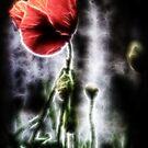 Electric Poppy by Darren Allen