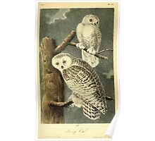 James Audubon Vector Rebuild - The Birds of America - From Drawings Made in the United States and Their Territories V 1-7 1840 - Snowy Owl Poster