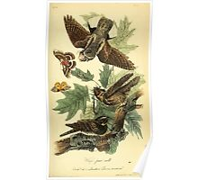 James Audubon Vector Rebuild - The Birds of America - From Drawings Made in the United States and Their Territories V 1-7 1840 - Whip Poor Will Poster