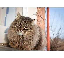 cat pet Photographic Print
