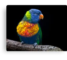 All the Colours of the Rainbow Canvas Print
