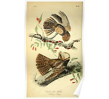 James Audubon Vector Rebuild - The Birds of America - From Drawings Made in the United States and Their Territories V 1-7 1840 - Chuck Will's Widow Poster